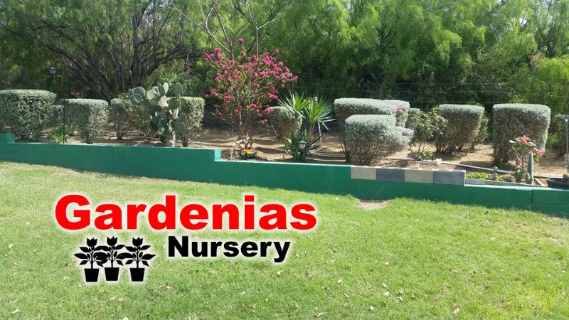 gardenias-nursery-zapata-tx-4