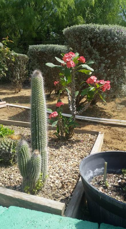 gardenias-nursery-zapata-tx-5