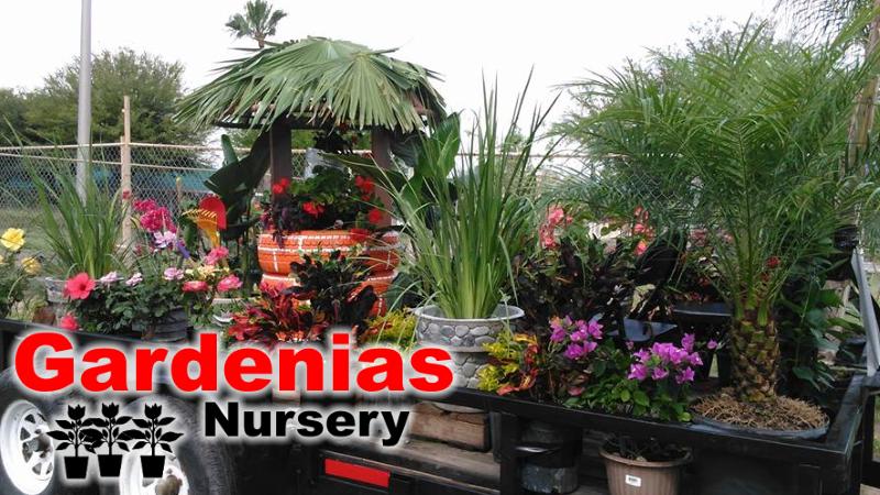 gardenias-nursery-zapata-tx