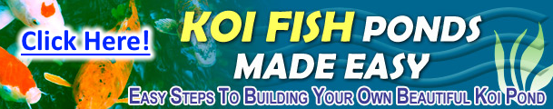 build-your-own-fish-pond