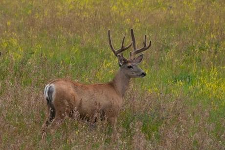 deer program