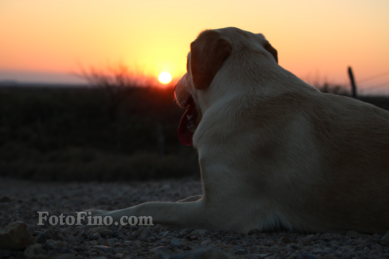 Dog Enjoying Sunset